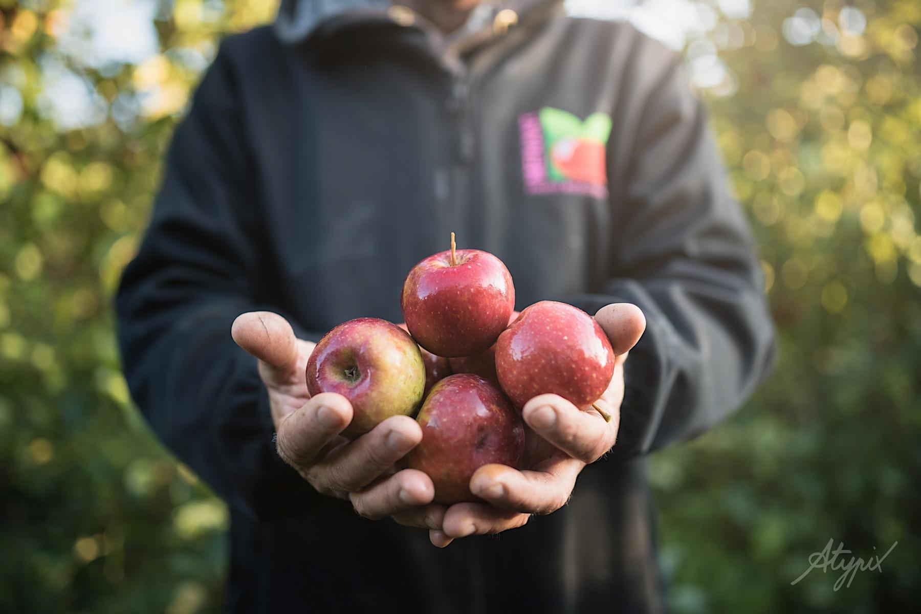 photo produit pomme biologiques