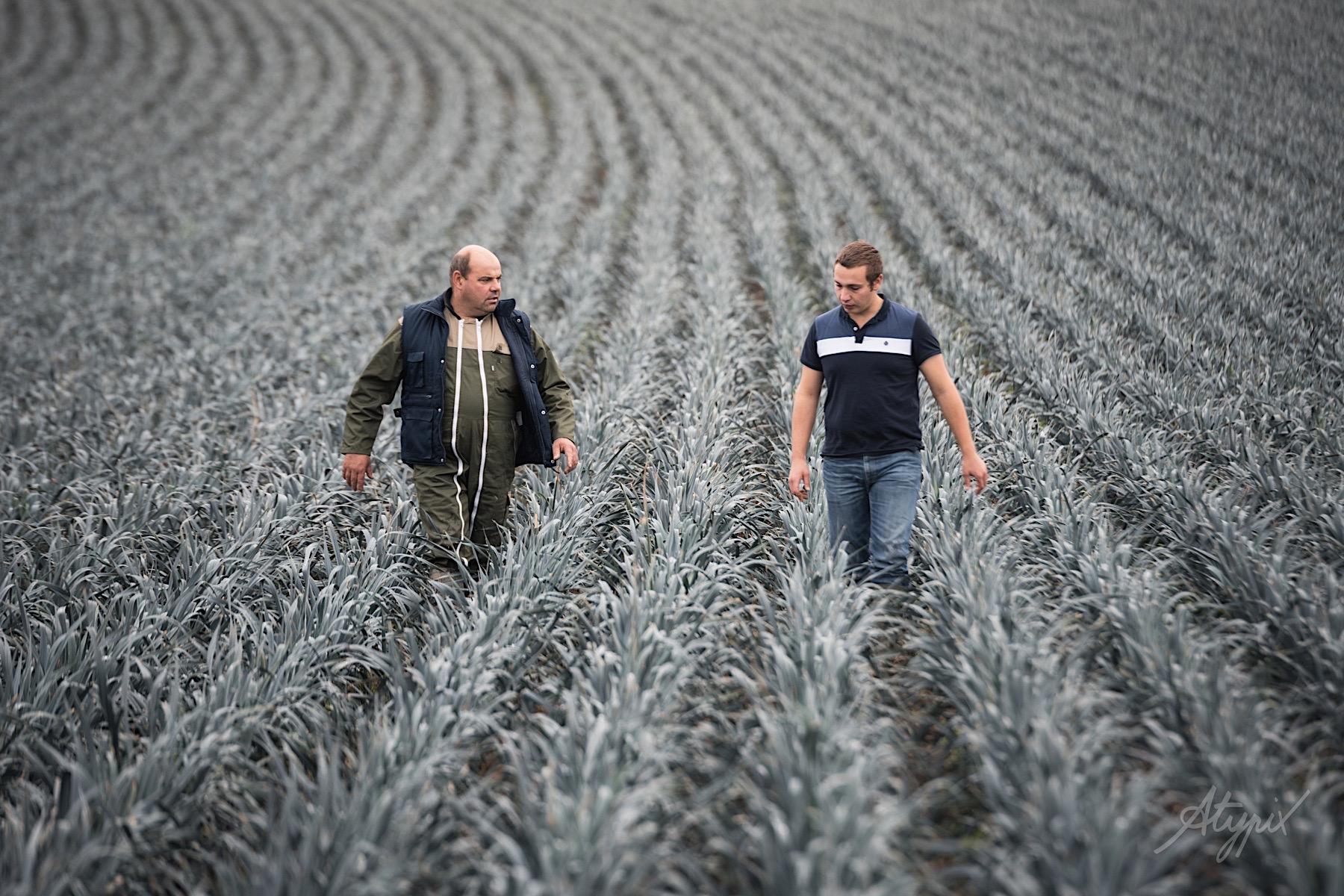 agriculteur champ de poireaux