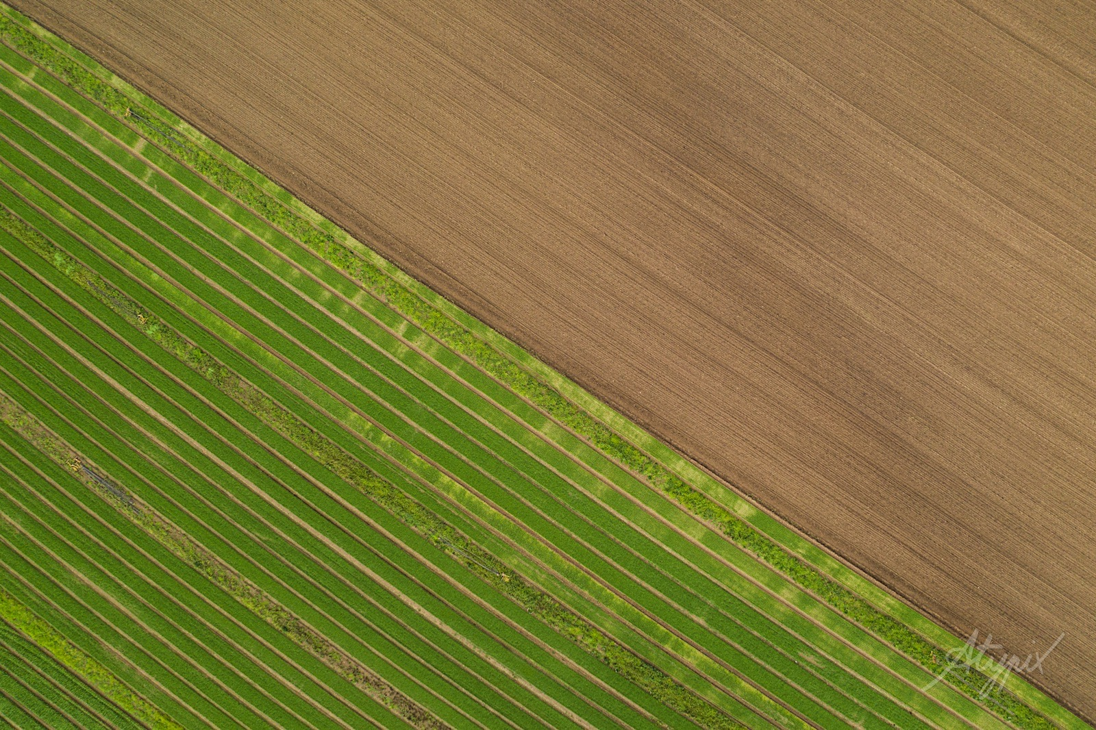 photographe drone agriculture