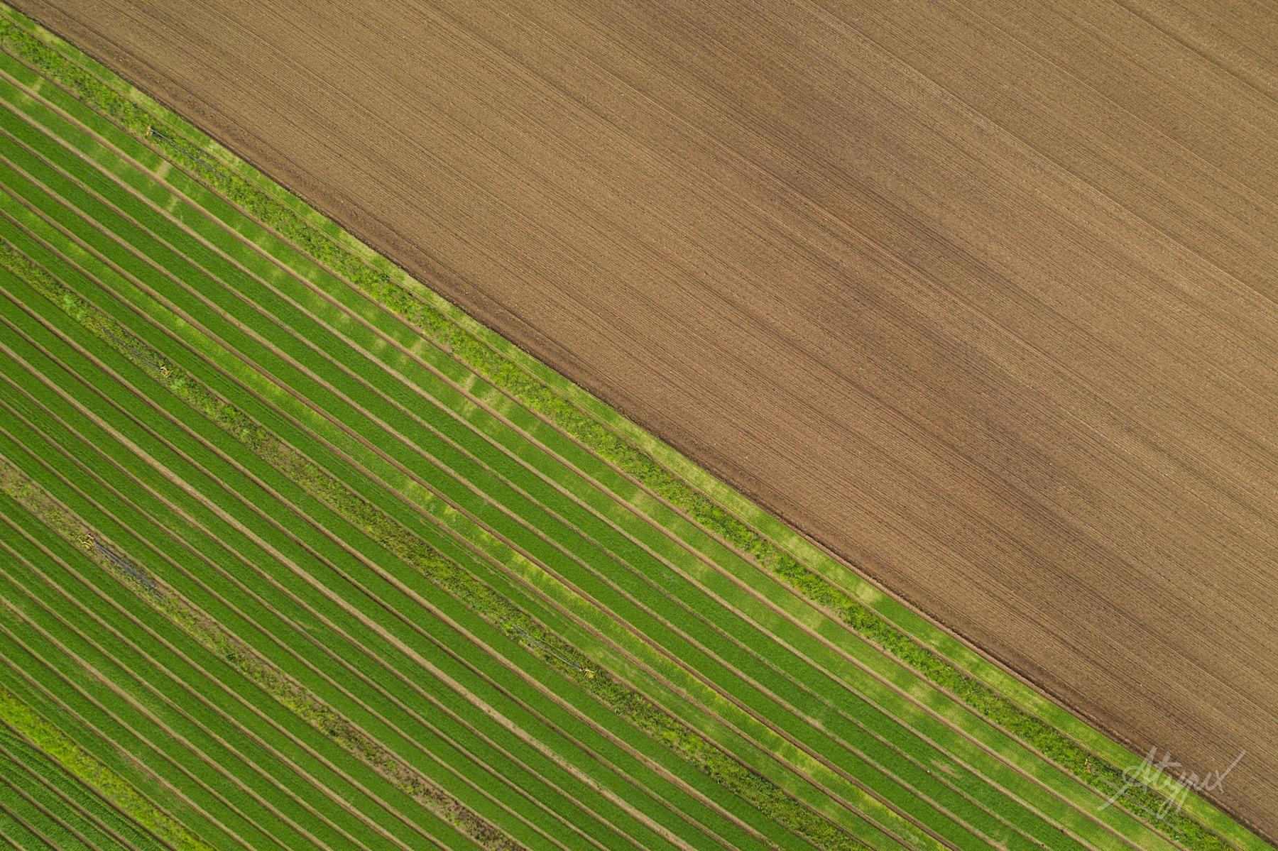 photographie aérienne champs