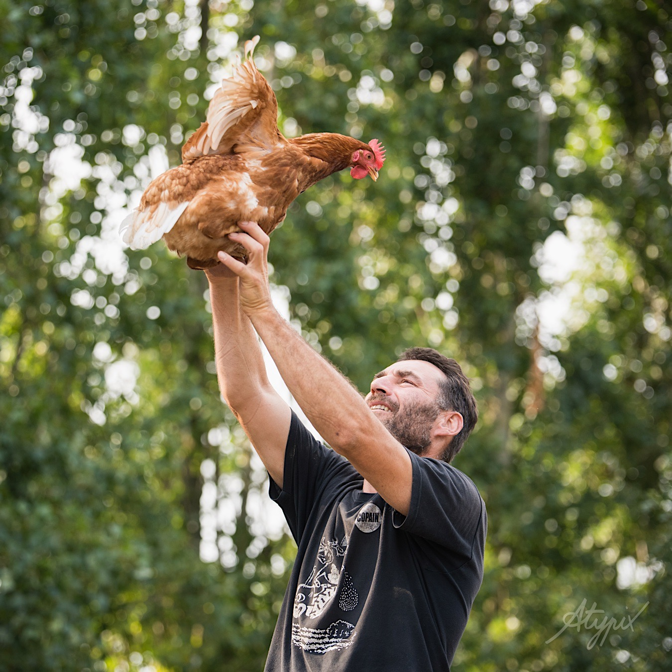 éleveur poules bretagne