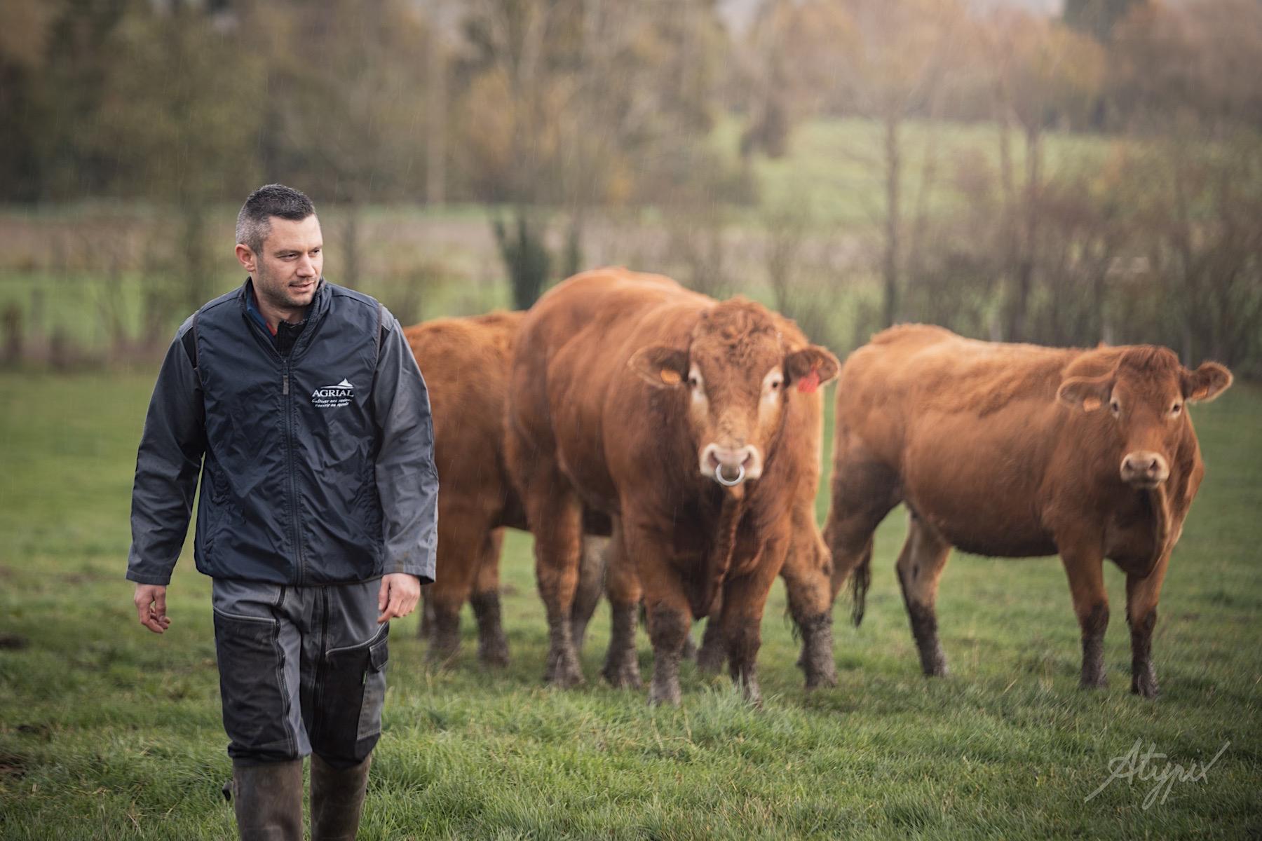 éleveur vaches