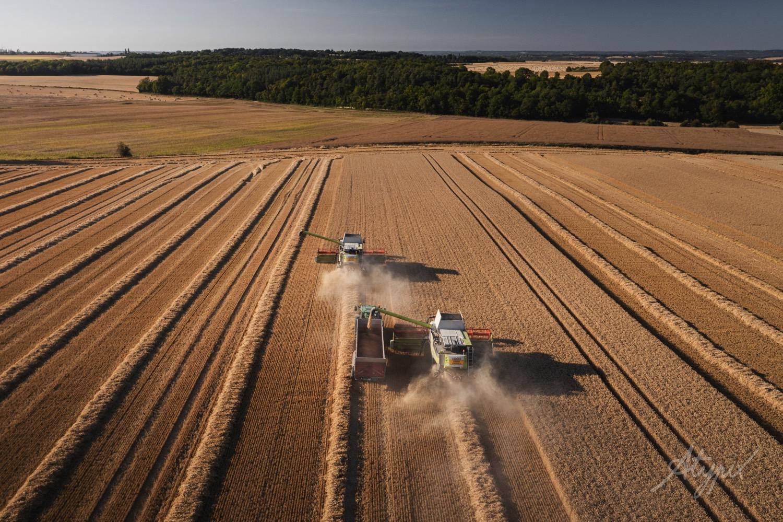Champs de blé Moissonnage