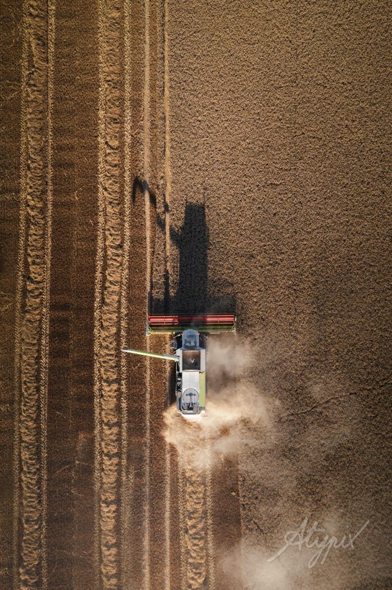 champs de blé pendant la moisson